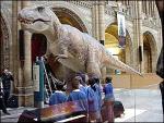 Последний Меловой динозавр в Британском музее