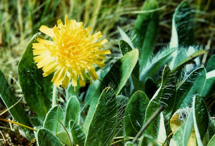 Записи цветы фото желтые цветы