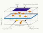 Электронные биомеханические имплантанты