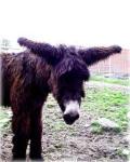 Родился у лошади осленок...