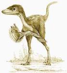 Для чего динозаврам перья?