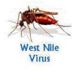Разработана вакцина от вируса лихорадки Западного Нила