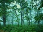 Восстановление лесов в Китае