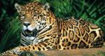Крупнейший тропический национальный парк